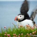 Islanda Selvaggia – Fiordi Occidentali